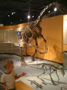 Check out the newest exhibit to arrive at the Mesa Southwest Museum: Therizonasaurs!